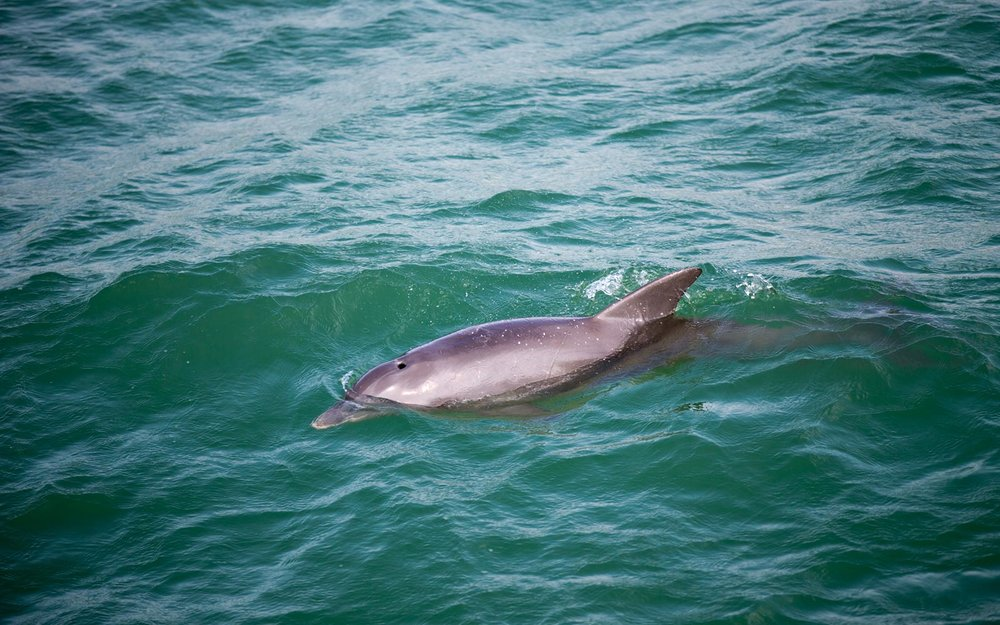 bottlenose-dolphin-florida-ANNAMARIA0306.jpg