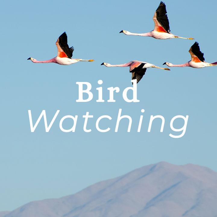 atacama-bird-watching.jpg