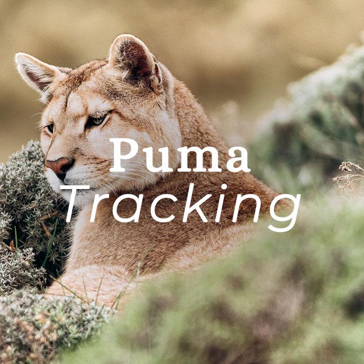 S.Patagonia-puma.jpg