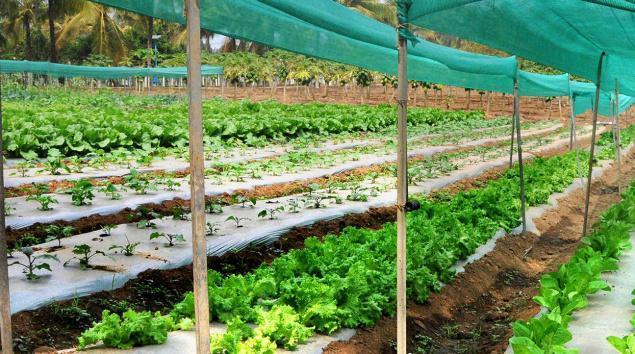 horticulture_3169833f.jpg