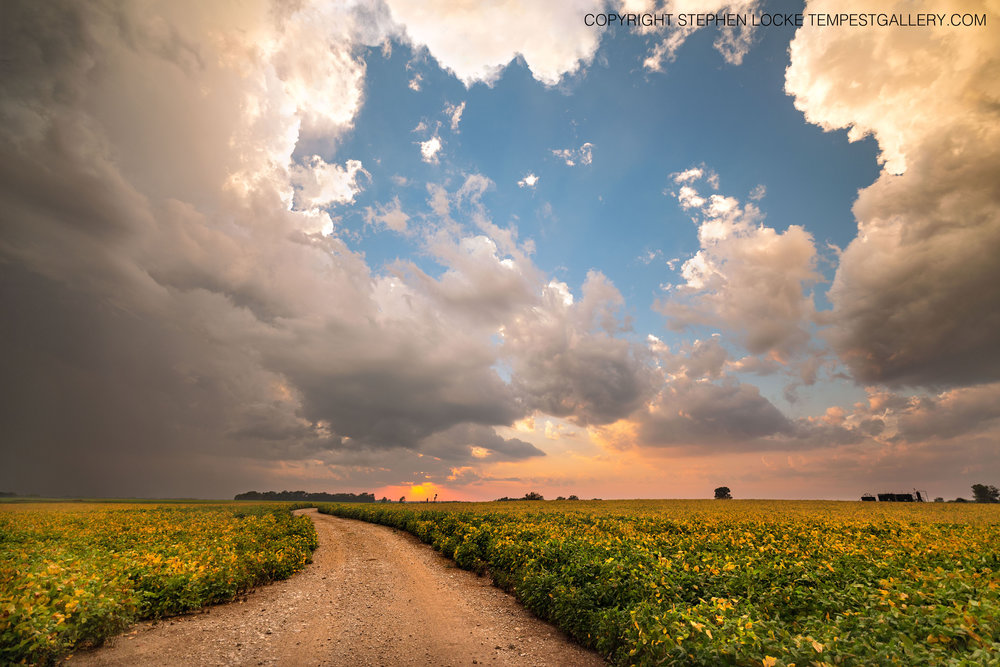 Edamame Sunset by Stephen Locke