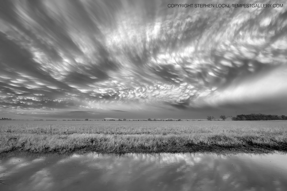 Perry Mammatus by Stephen Locke