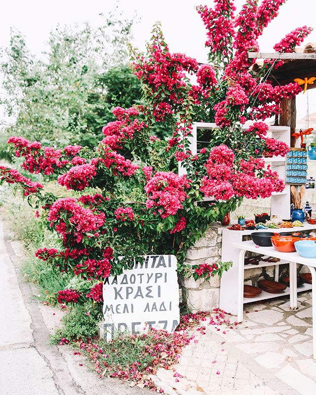 it's all greek to me 🌺🌺🌺