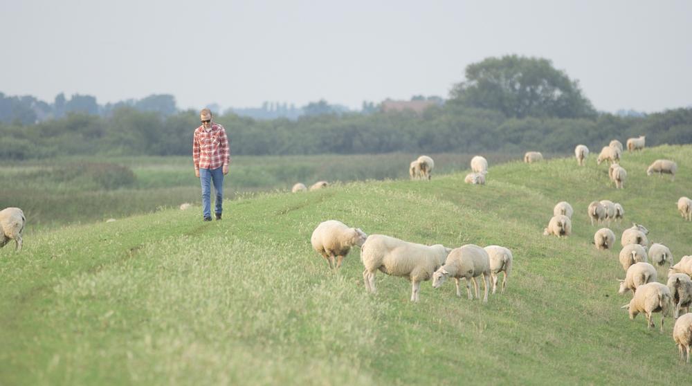 Vincent-sheep-ridge-walk.png