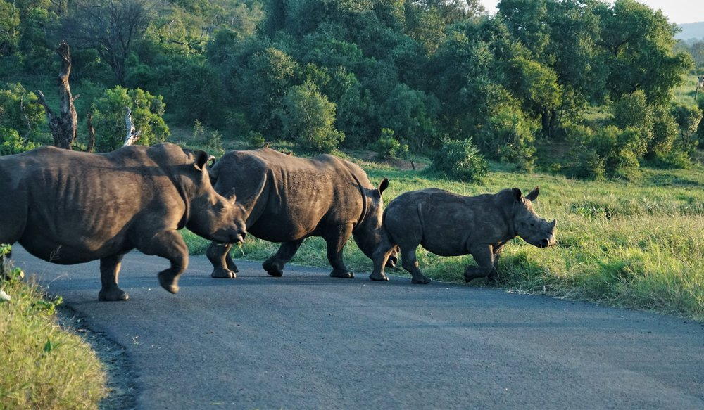 Rhinos in Royal Hlane National Park, Swaziland