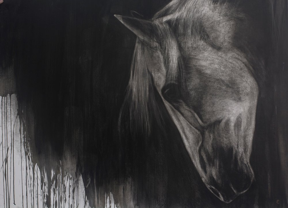 '' Blood Horse '' Charcoal and Chinese ink on board