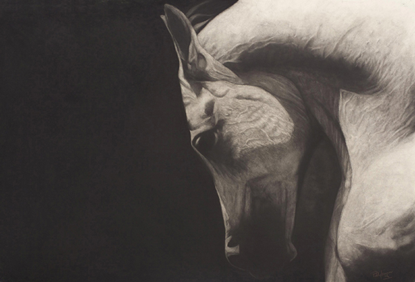 '' The Arab'' Charcoal on board 32 x 44ins