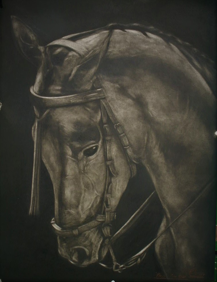 '' Spanish Horse'' Charcoal on board, 32 x 44ins