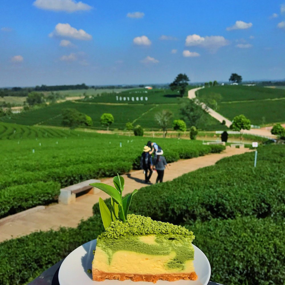 Choui Fong Tea Plantation Chiang Rai cheesecake