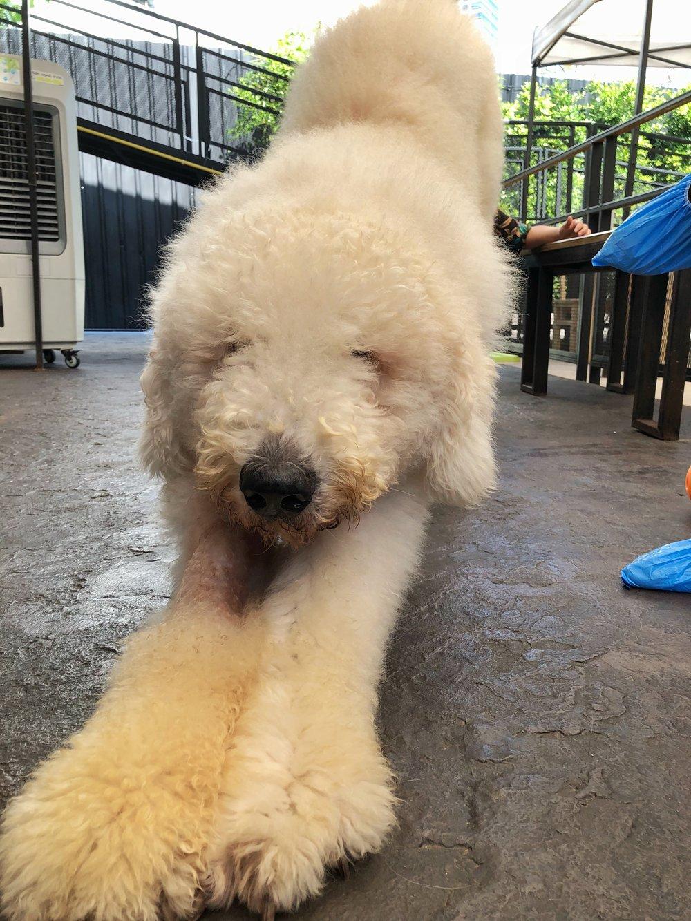 Big Dog Cafe Bangkok Komondor
