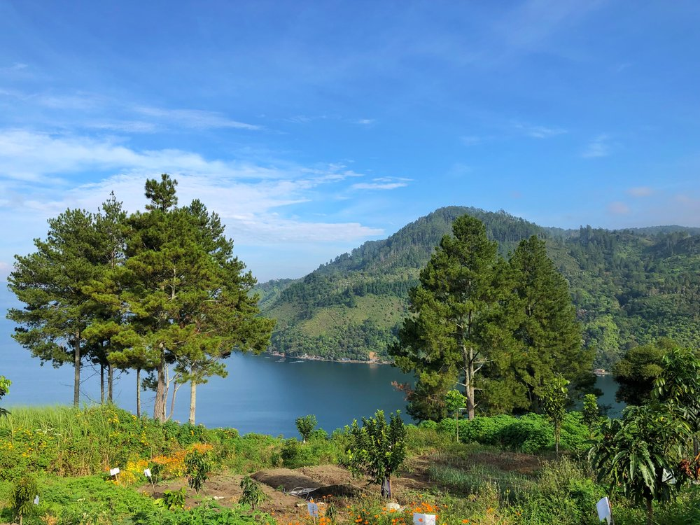 lake Toba patra comfort parapat