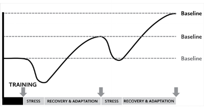 The Stress/Recovery/Adaptation Cycle borrowed from StartingStrength.com