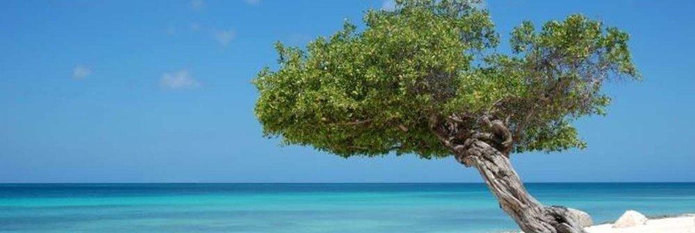 eagle-beach.jpg.1340x450_default.jpg