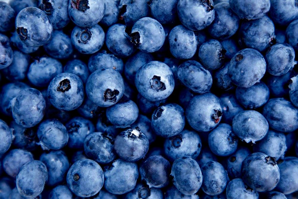 background-blueberries (1).jpg