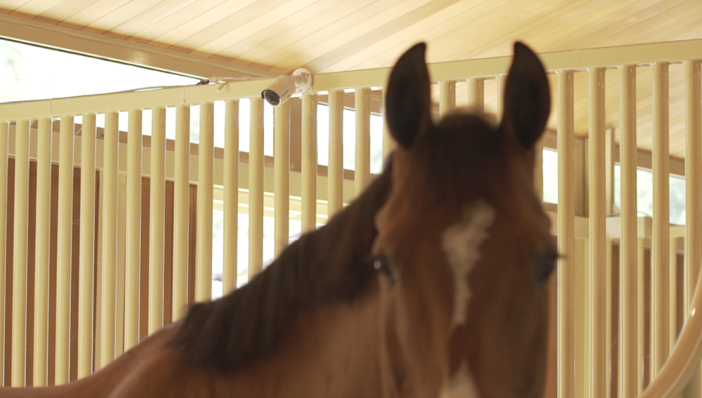 The StableGuard system provides 24/7 surveillance of your horse via live streaming video.