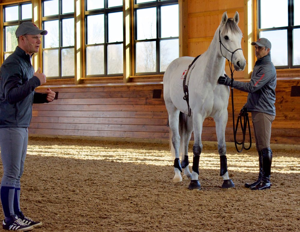 """Disco, a grey gelding who recently came from Germany, is very sensitive to the point where he becomes so concerned about making a mistake it almost paralyses him. """"Going to horse shows was a huge struggle for him,"""" said Alexa, Rodrigo's wife."""