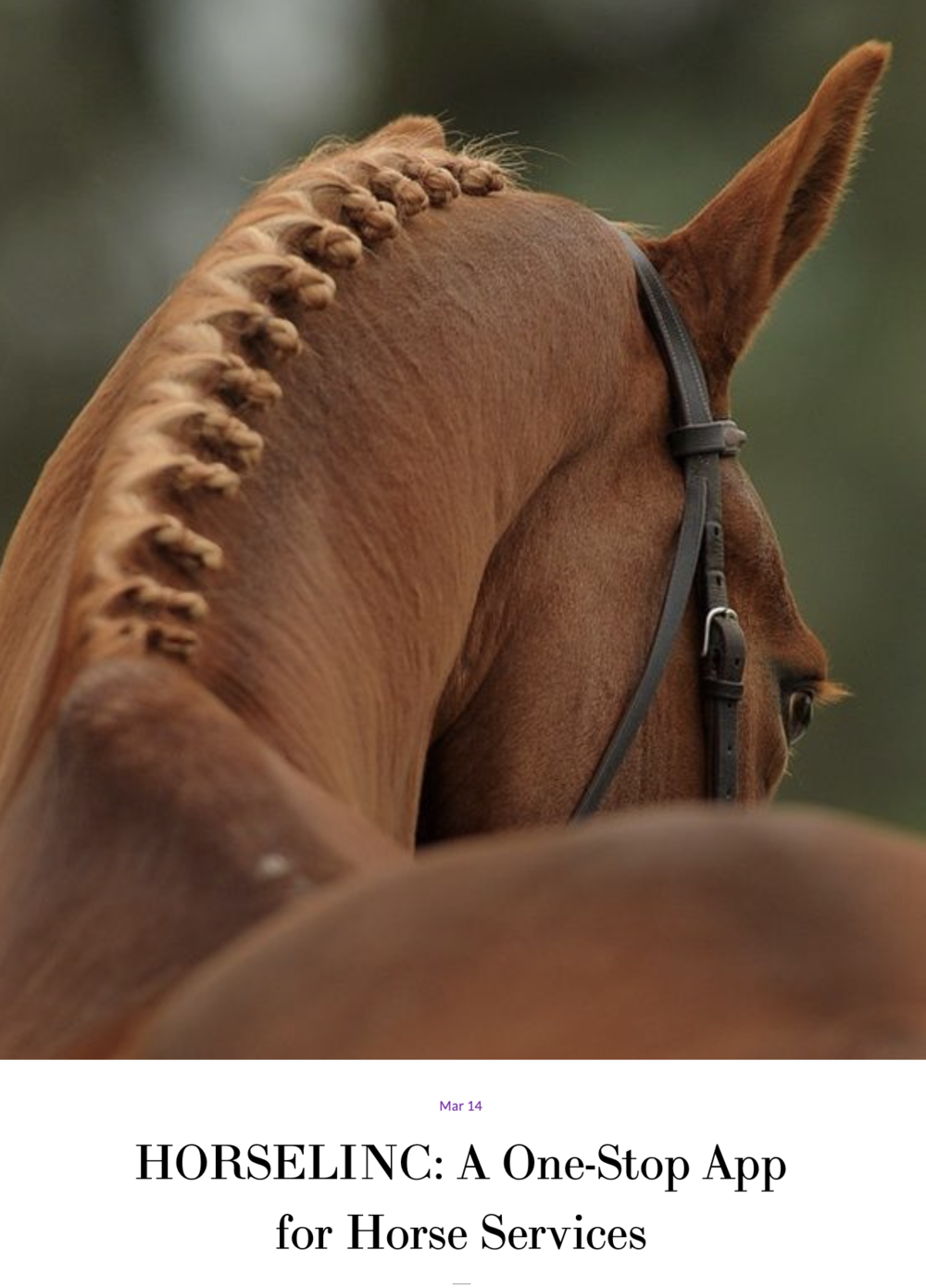 "#2 HorseLinc - ""My goal was to create an app that would make life easier for the trainer, rider, and owner, and to be able to link all of the services that go with owning a horse."""