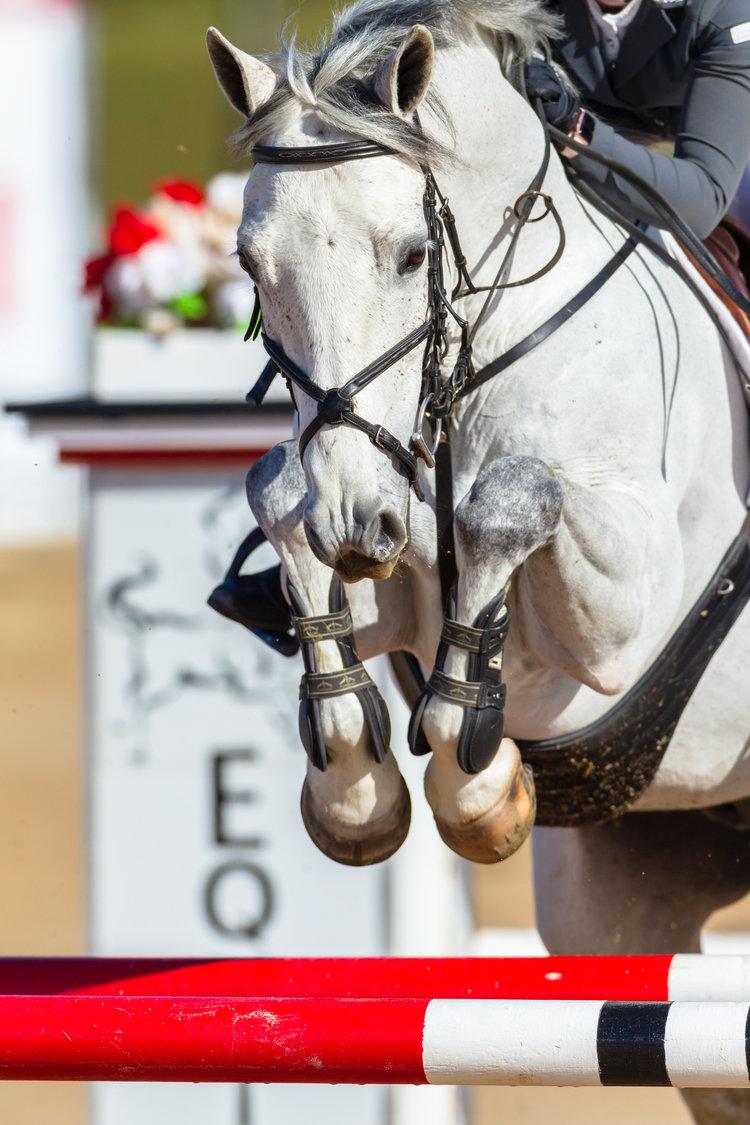 Post - The Tech Equestrian