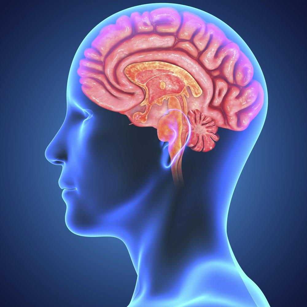 brain-barrier.jpg