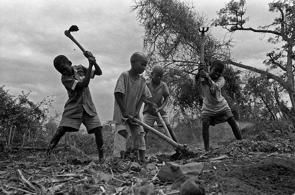 Orphans in Homa Bay, Kenya at work making charcoal. First trees are cut down and then the wood is slowly maked underground. Desperate to survive the children sold most of the charcoal at local markets and used a little for themselves for cooking.