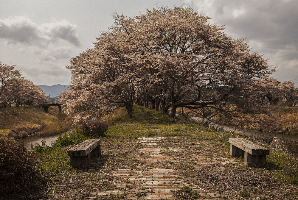 東京の 空に桜の 満ち満てど 十キロ圏の わが里哀しthough cherry blossomsin the skies of Tokyobloom in profusionsorrow abounds within theten-kilometer radius of my home - 半杭 螢子 (福島県 2011年5月)Keiko Hangui, Fukushima May 2011