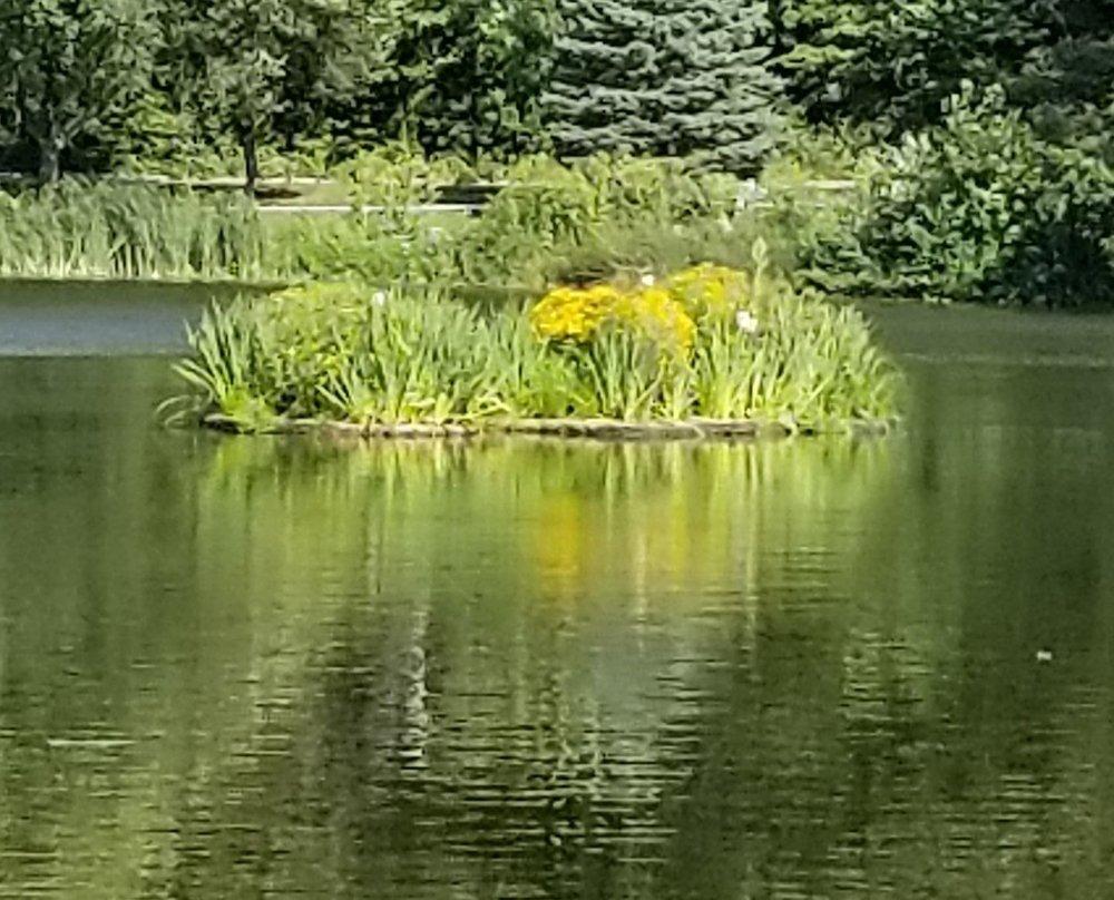 A floating garden in full bloom!