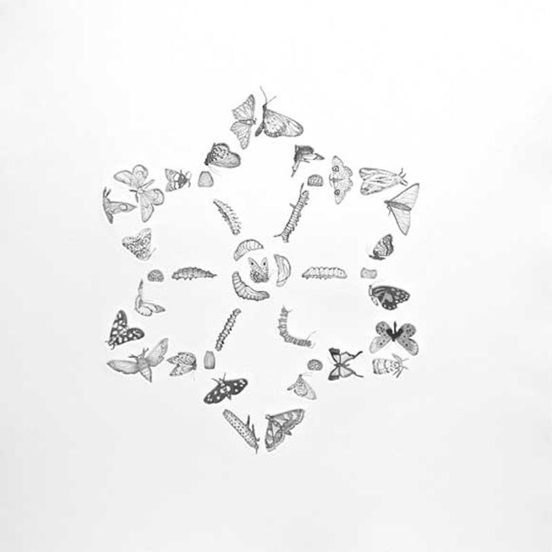 Mandala for Trust (2013)