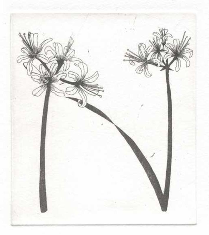 Fynbos A - Z  (Nerine) (2012)