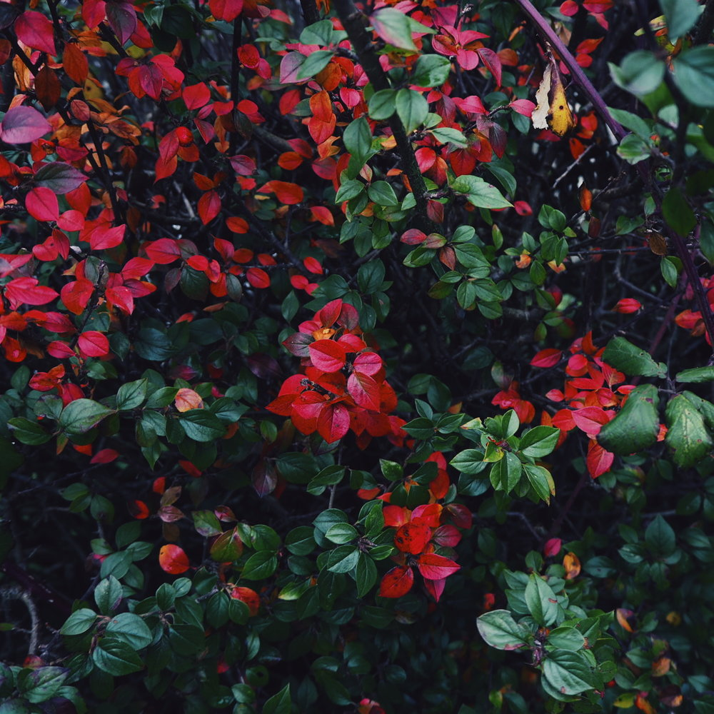 Red and Green plant
