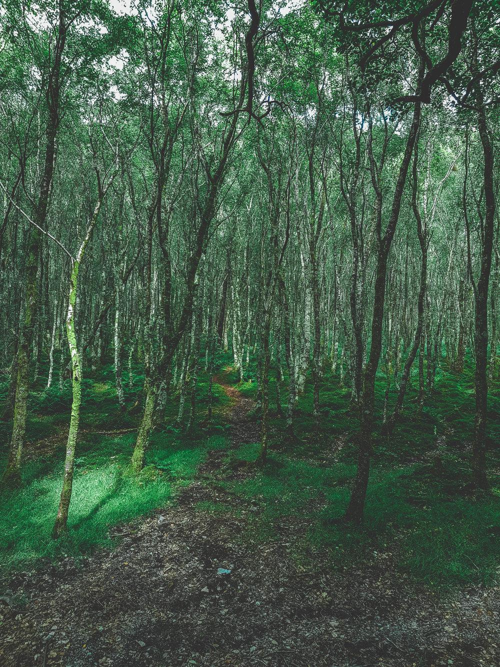 Green Forrest Ireland.
