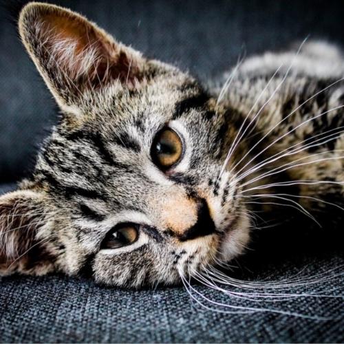 Cat on upholstery.jpeg
