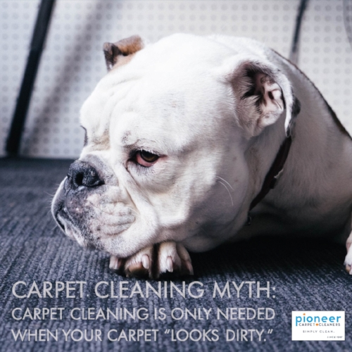 CC Myth_ Cleaning only needed when carpet looks dirty.jpg
