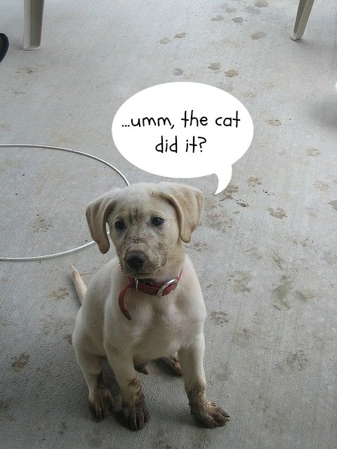 The cat did it (dog with muddy paws).jpg