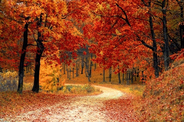 red autumn forest path