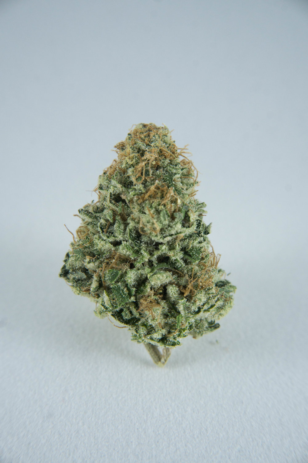 Hybrid (Sativa dominant) Musky blueberries with slightly spicy undertones. A mild Sativa dominant strain that will keep you energized throughout your daily chores. Great all day smoker!