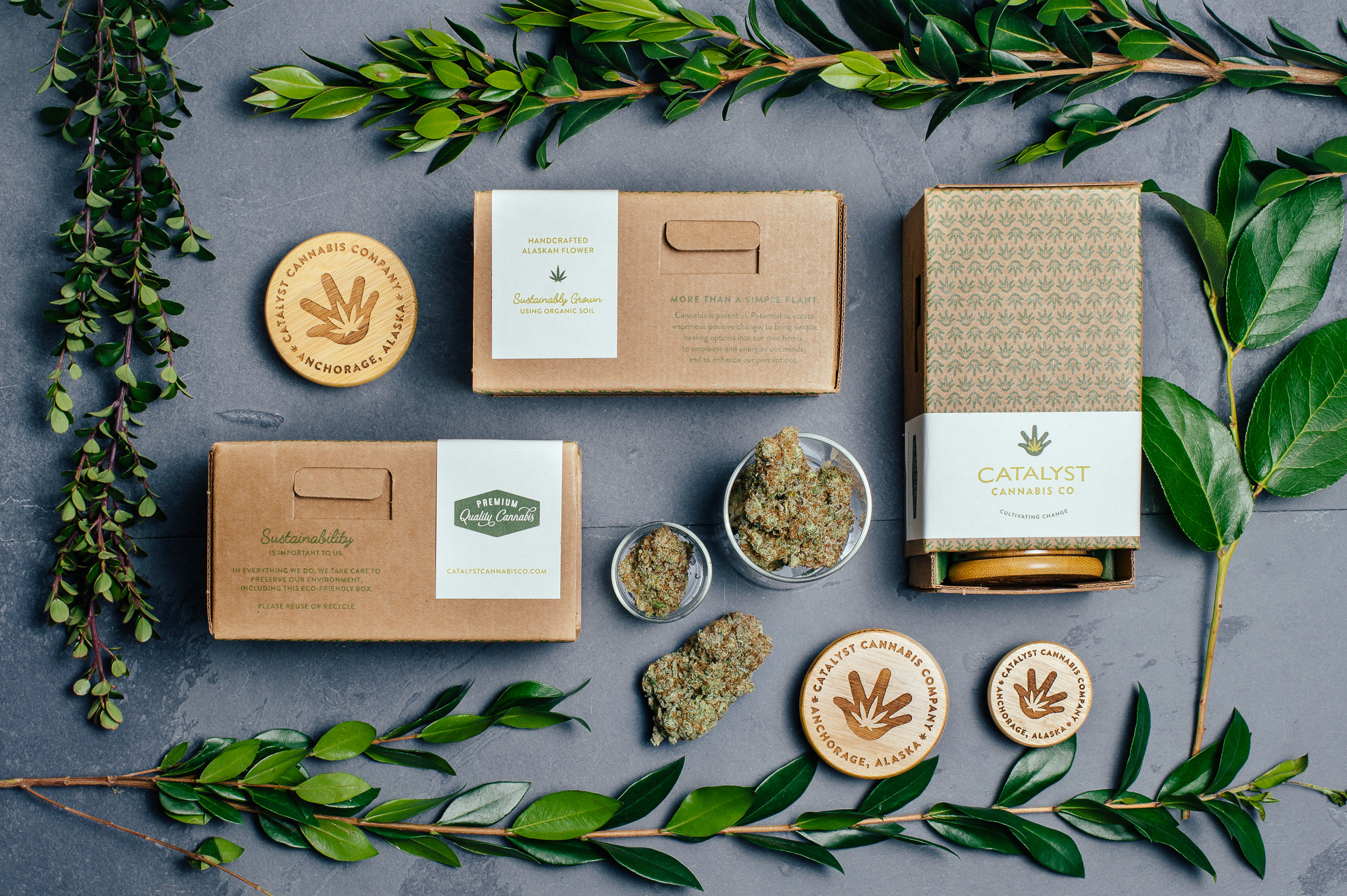 Image result for catalyst cannabis co