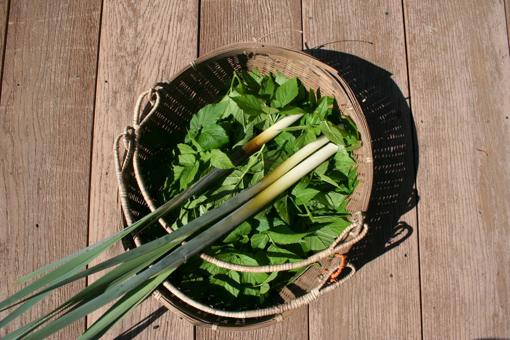 Foraged Bullrush Stem with Ground Elder