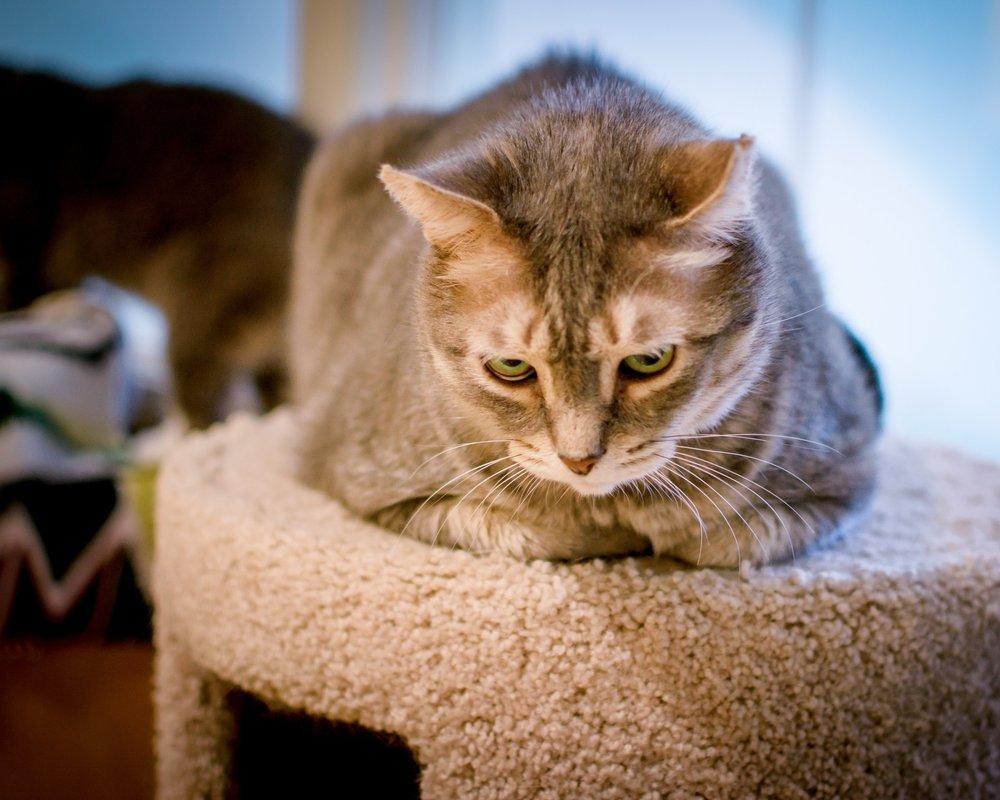 Cat Boarding Facilities | Bees Ferry Veterinary Hospital