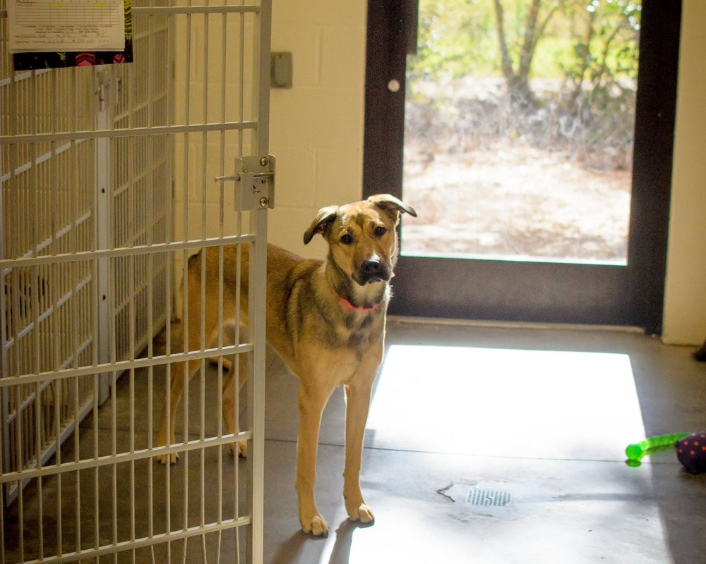 Dog Boarding Kennel | Bees Ferry Veterinary Hospital