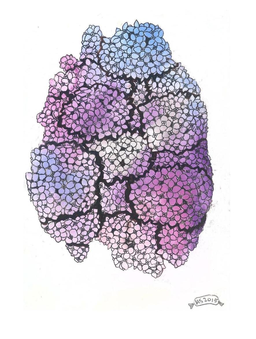 Hybraingea