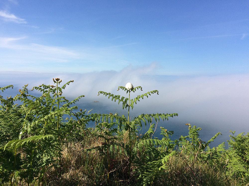 island egg vortex / wy ynys fortecs / huevo isla vórtice, 2017, albumen crystoleum in progress