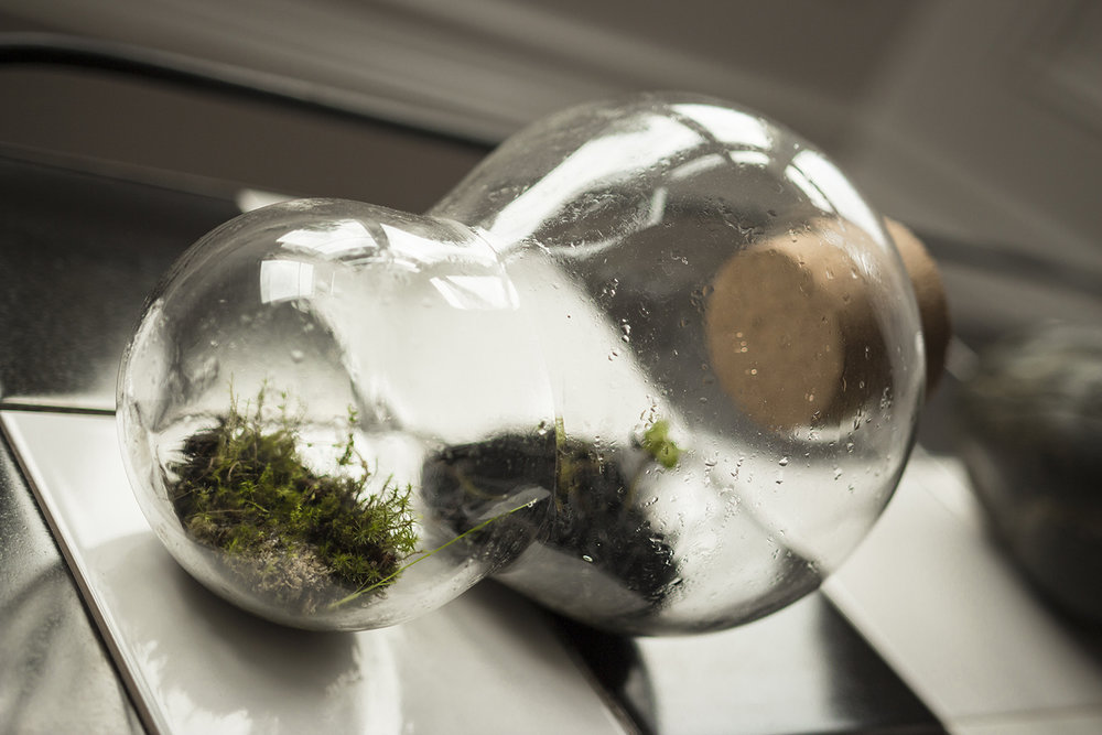 terrarium (enlli), fragments of eroded footpath vegetation, water mint, blown glass, stones, compost, elan valley biochar, water, 2018 (image: luca cole)