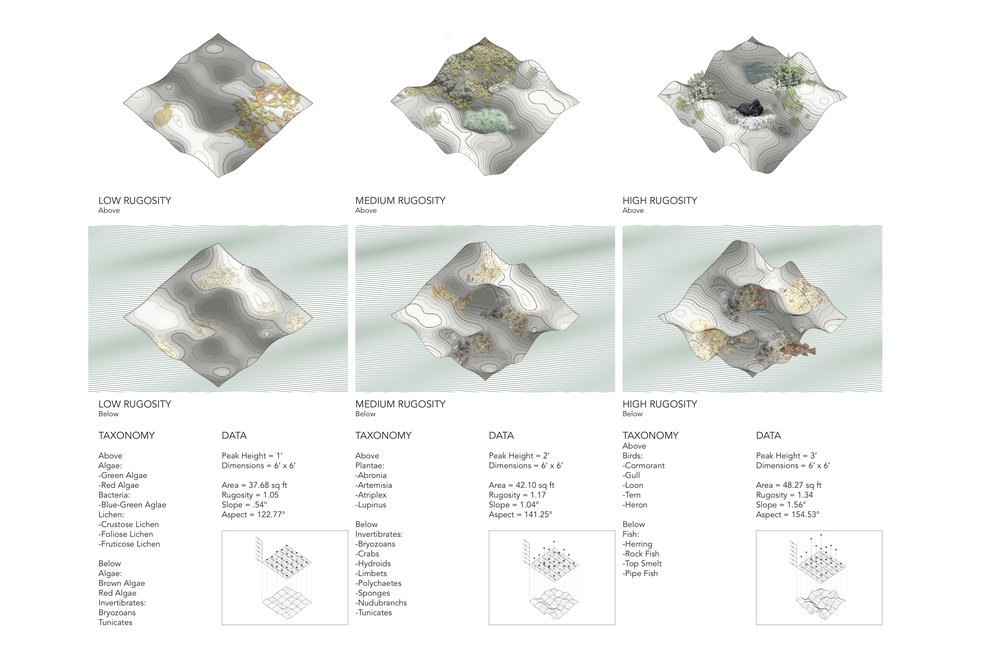 Taylor Madeline Rugosity Typologies.jpg