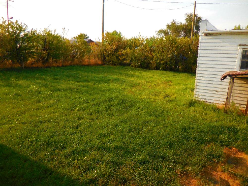 Back Yard.jpg
