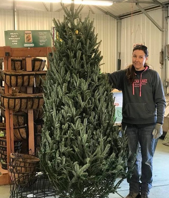 Are you still looking for a Christmas tree?  We have one beauty left!  It's about 8 feet tall, full, and beautiful!  It's $70.  Call us at the greenhouse if interested.  Merry Christmas!