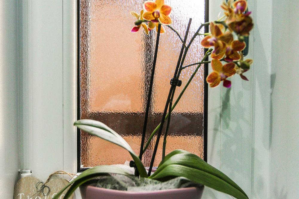 Bearsden-Beauty-Homepage-04.jpg