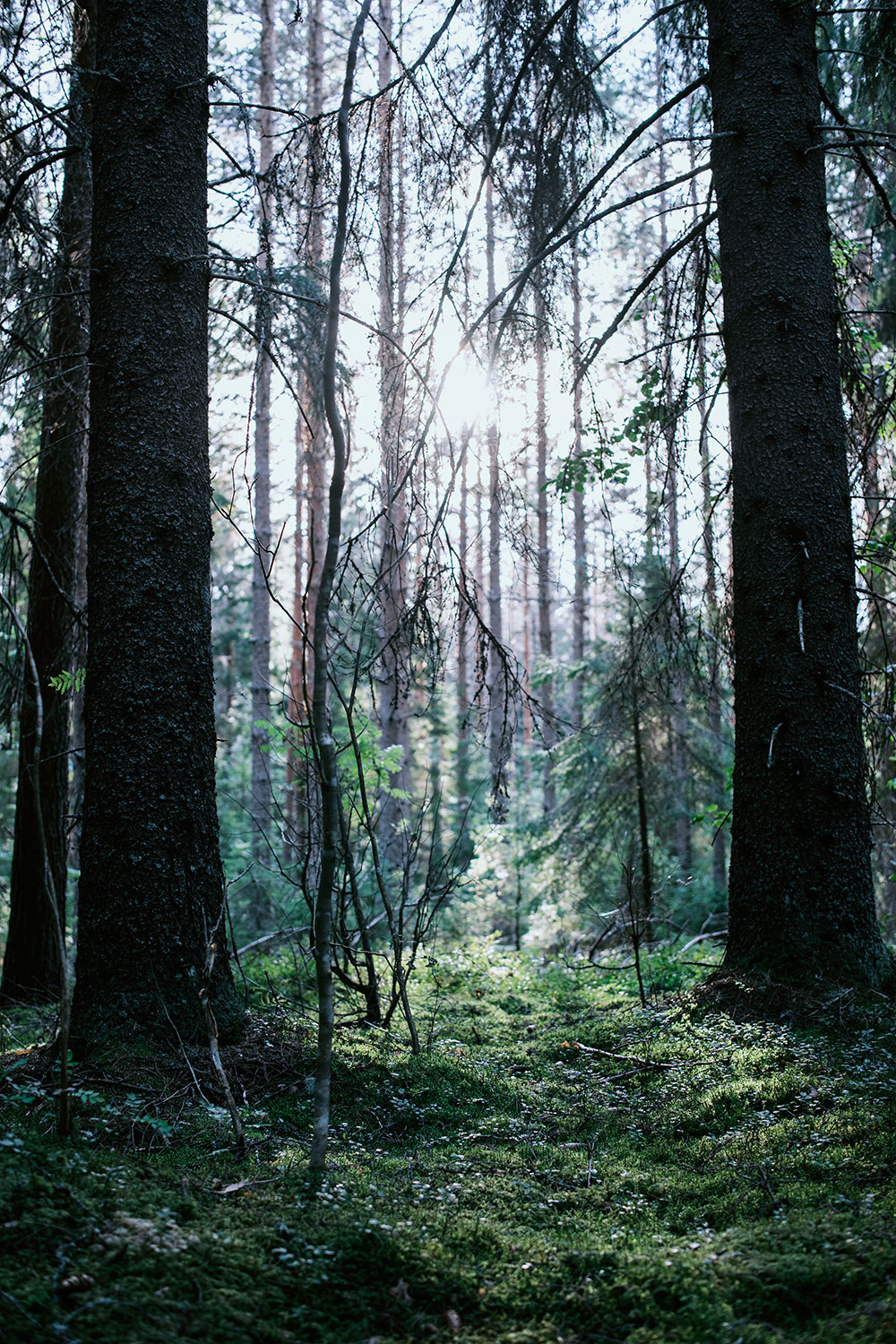 Sunlight filtering through the forest