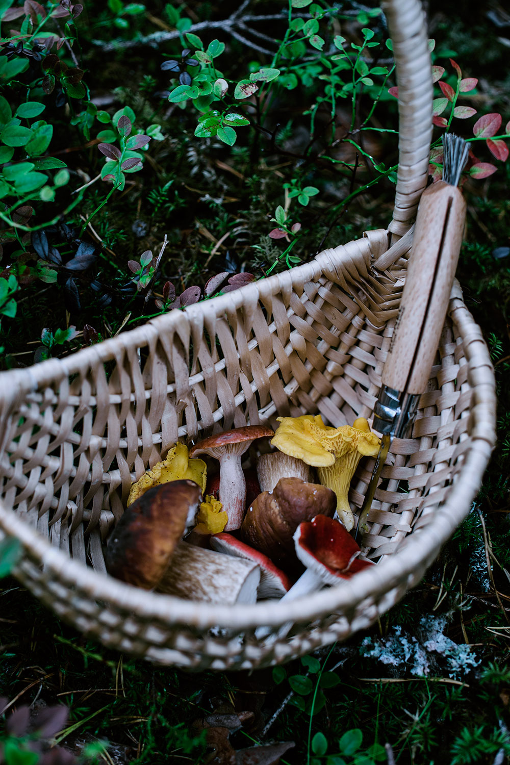 A basket full of mushrooms found in the forest