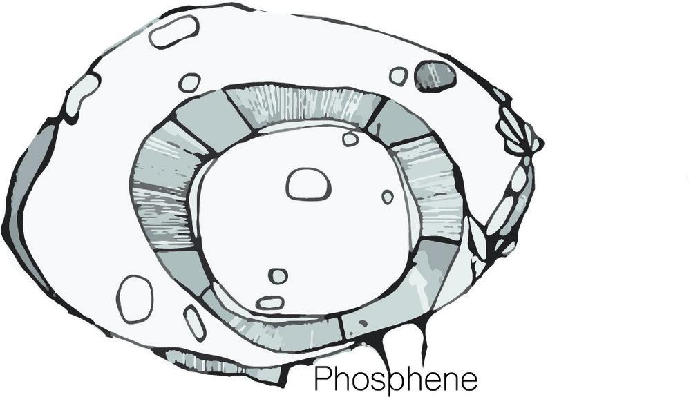 Phosphene_Logo_2018.jpg