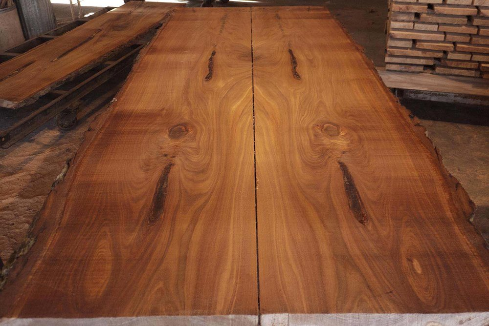 JCH_Highlights_8 foot red elm #2.jpg